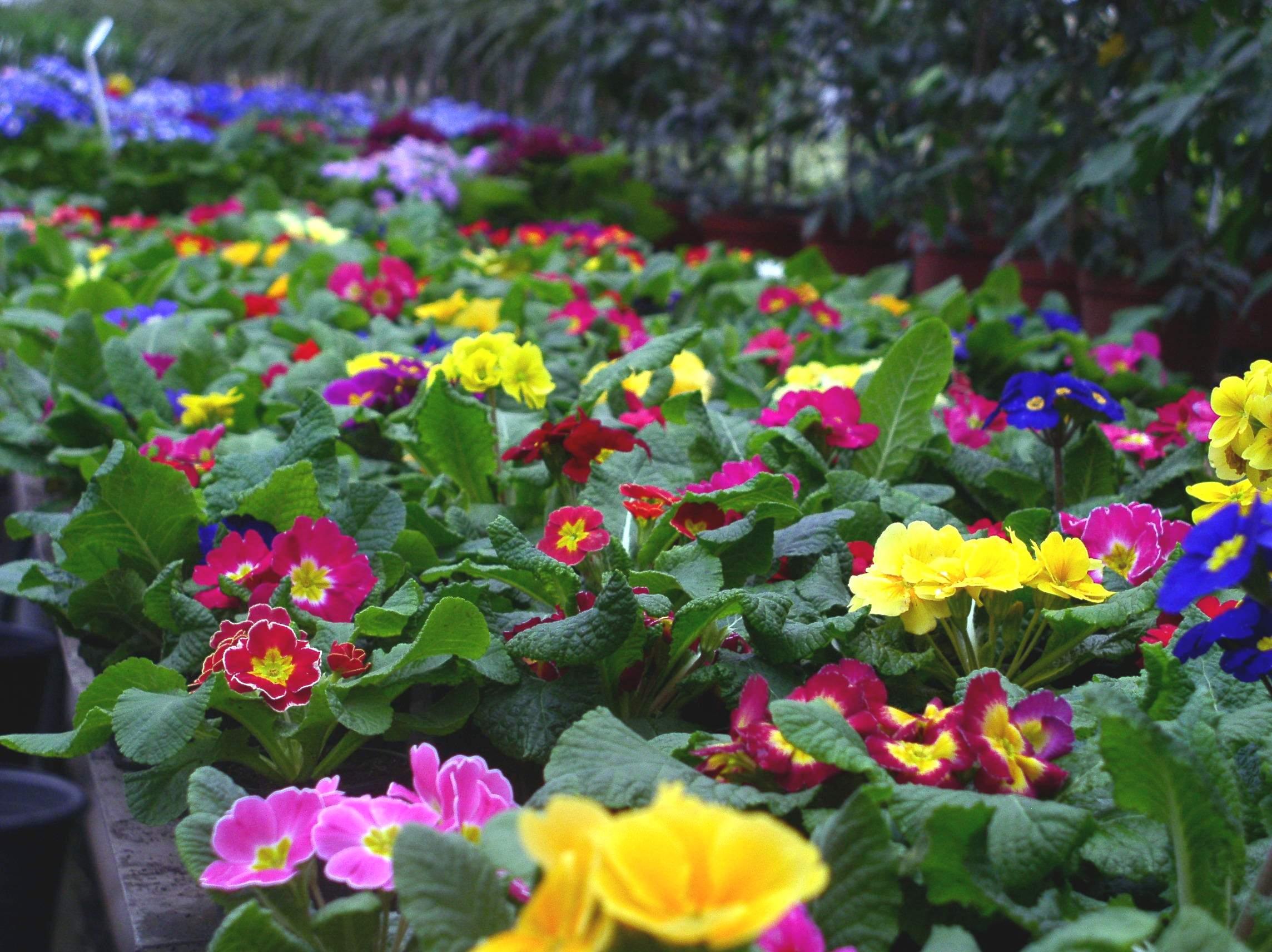 Фото цветов в костанае